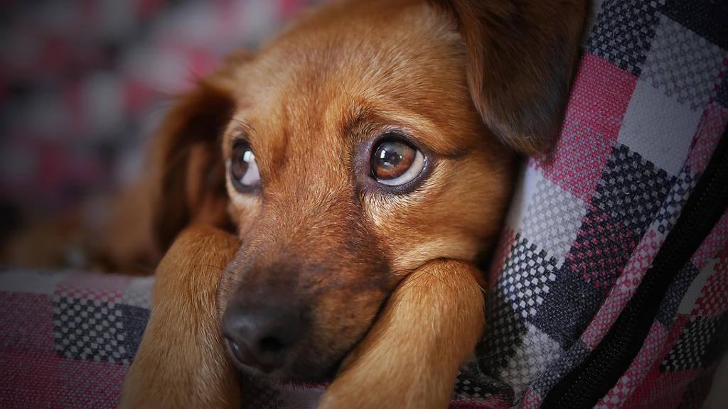 Animali domestici, i consigli per una primavera senza parassiti